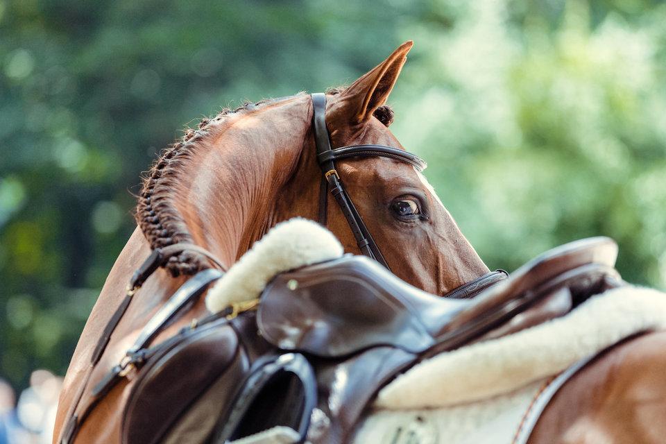 Телеканал «Конный мир» и Sportbox.ru покажут выступления сборной России на чемпионате Европы по конному спорту