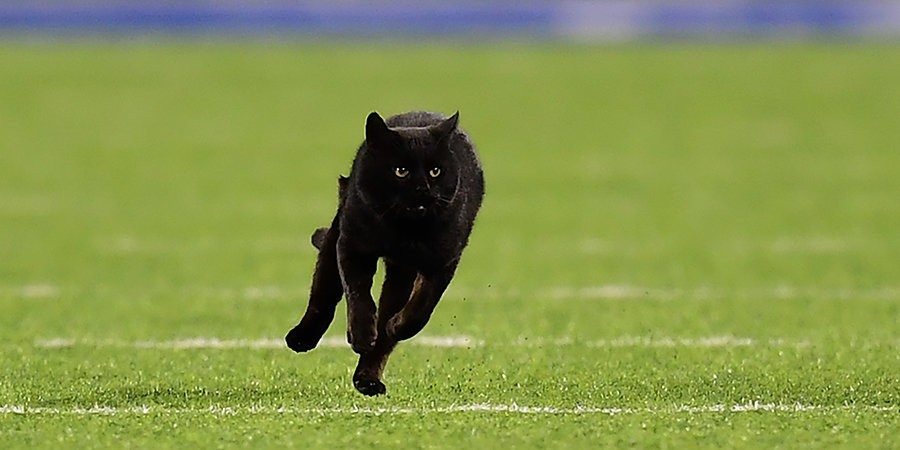 Кот стал главной звездой матча НФЛ. Он провел на поле полторы минуты и сделал тачдаун (почти). Видео
