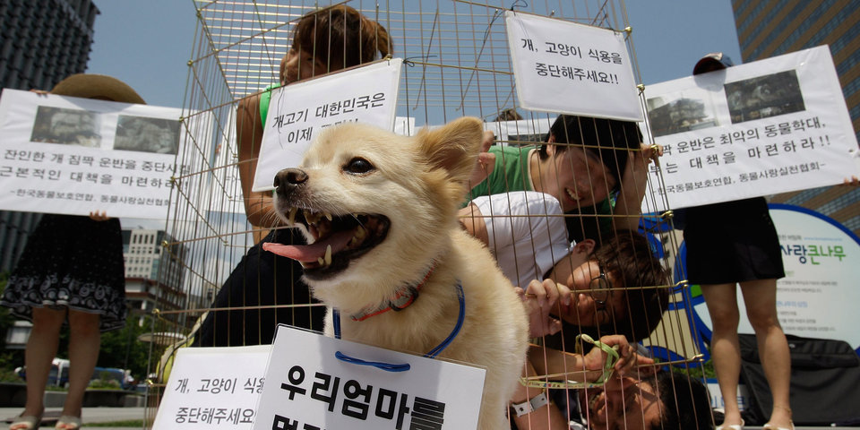 Станет ли поедание собак проблемой для Олимпиады в Корее? Расследование «Матч ТВ»