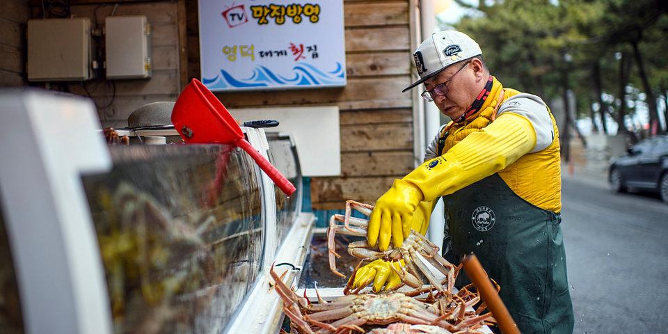 «Весна красна моллюсками, а осень — каракатицами». Что за страна — Корея?