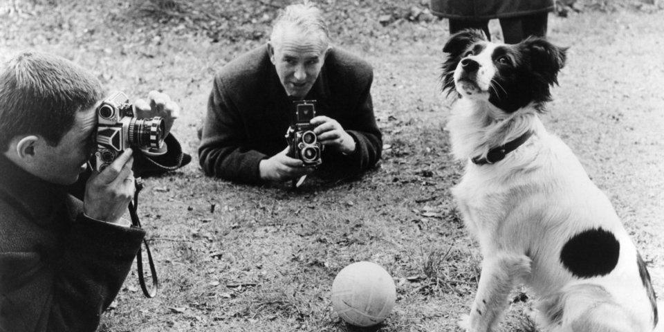 Собачья работа. Как пес Шалопай нашел похищенный Кубок мира