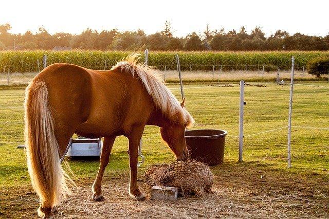 ВОмскую область забрели лошади изКазахстана